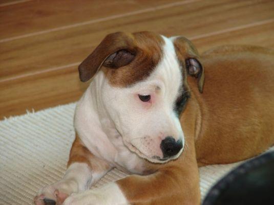 Cute Puppy: Achilles the Shadow