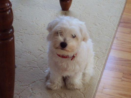 Cute Puppy: Active Little Lucky