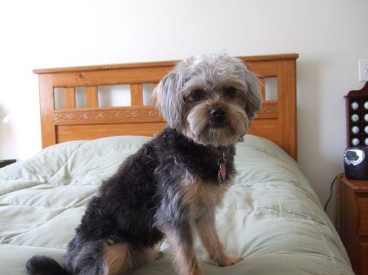 Cute Puppy: Cute Chloe