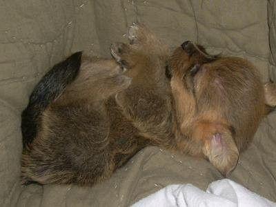 Cute Puppy: Cuddly Gotti