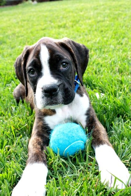Cute Puppy: Energetic Guinness