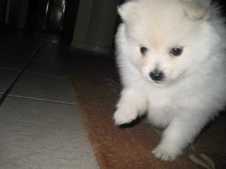 Cute Puppy: Jacky Chan