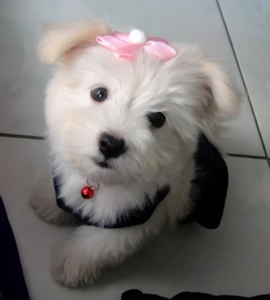 Solenn the Maltese
