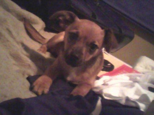 Cute Puppy: Darlah