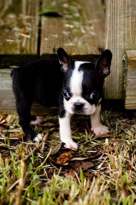 Cute Puppy: Harley