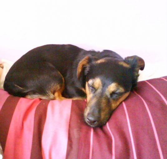 Cute Puppy: Lazy Daisy