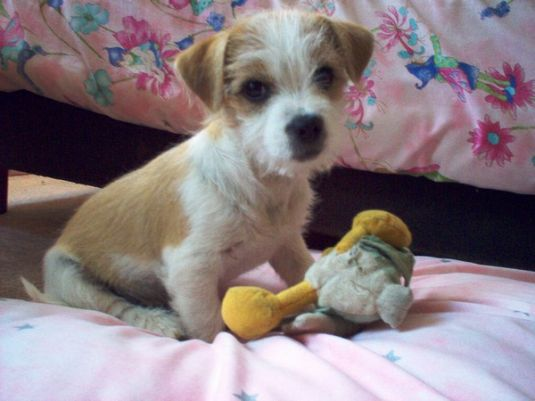 Cute Puppy: Spike the Cowardly Lion